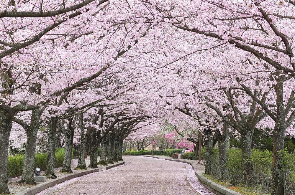 七谷川・和らぎの道