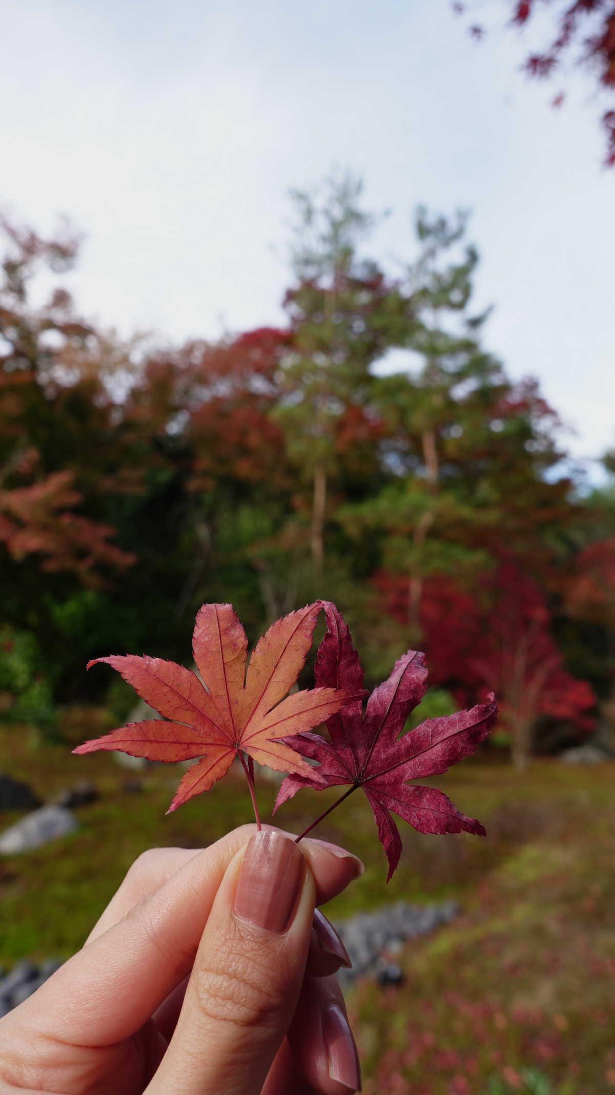 今回の紅葉狩りで一番綺麗な京都の宝厳院 - TRIPROUD
