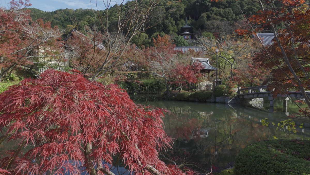 永観堂の内部も見れて満足な京都の紅葉スポット - TRIPROUD