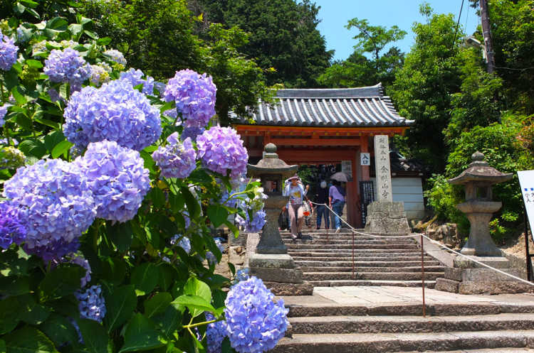Hydrangeas As Far As The Eye Can See!  Hydrangea Temple With 60 Kinds & 10 Thousand Trees | Review of Yata-dera Temple