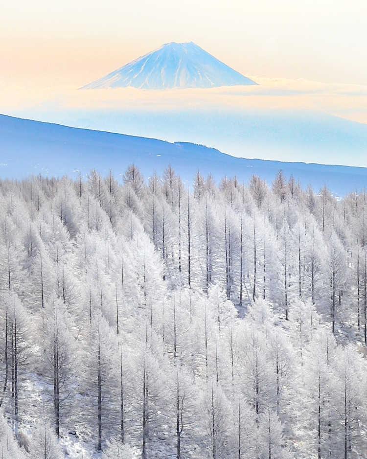 キラキラと輝く霧氷 | 霧ヶ峰高原の口コミ