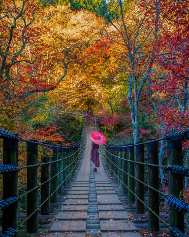 吊り橋と紅葉が創り出す美しい景色   花貫渓谷の口コミ