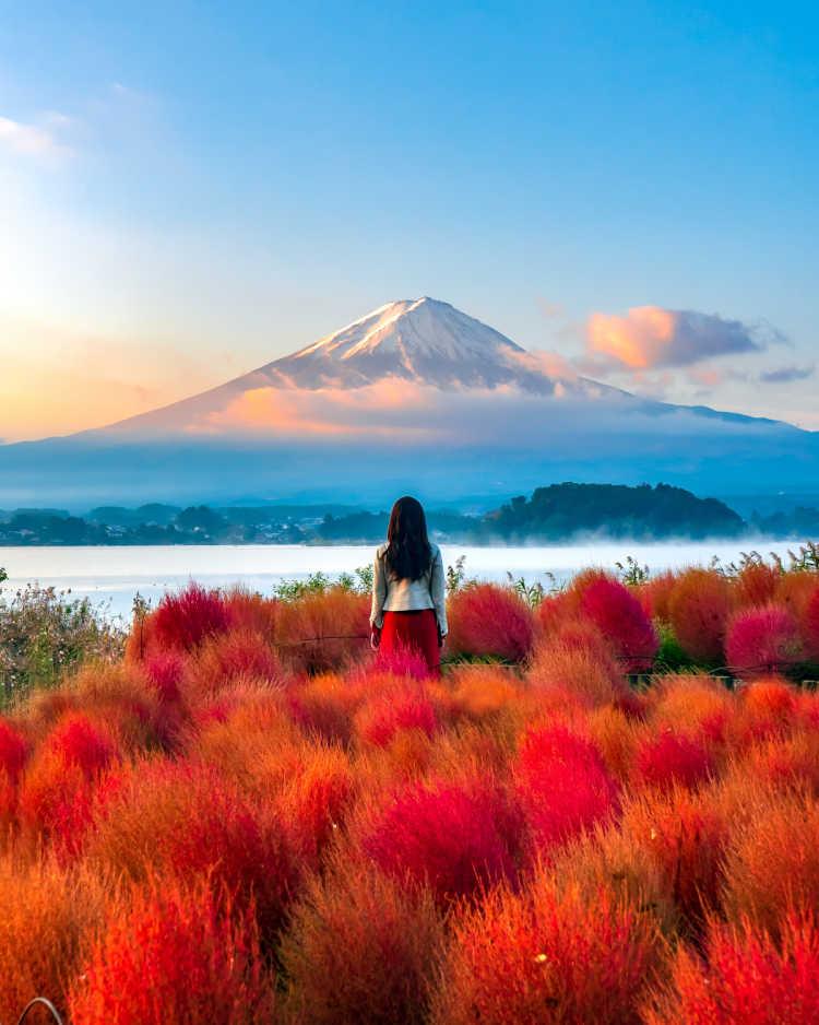 富士山とコキアのコラボ | 大石公園の口コミ