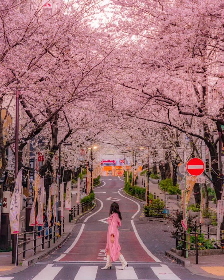 渋谷で見られる美しい桜並木   さくら通りの口コミ