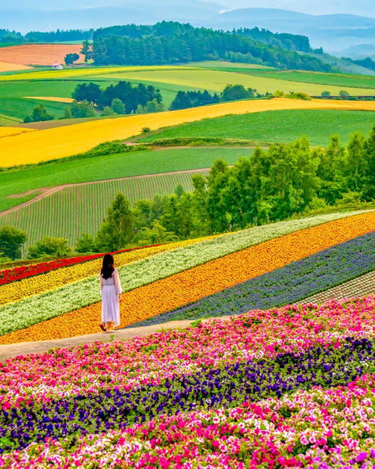 美しいお花の絨毯 | 展望花畑 四季彩の丘の口コミ