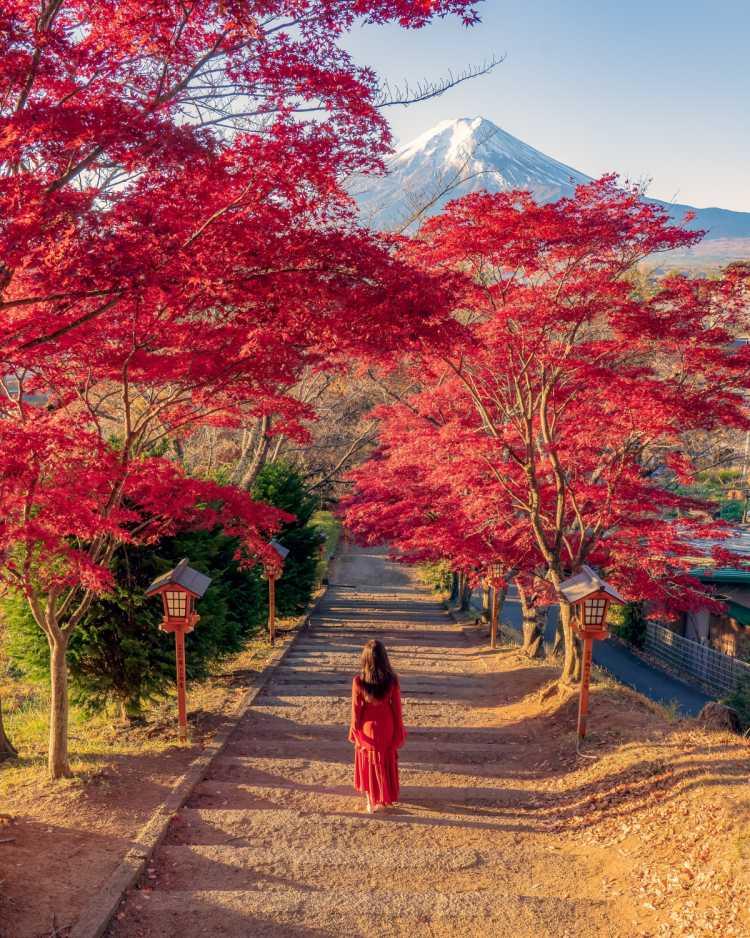 紅葉の時期も美しい新倉山浅間公園 | 新倉山浅間公園の口コミ