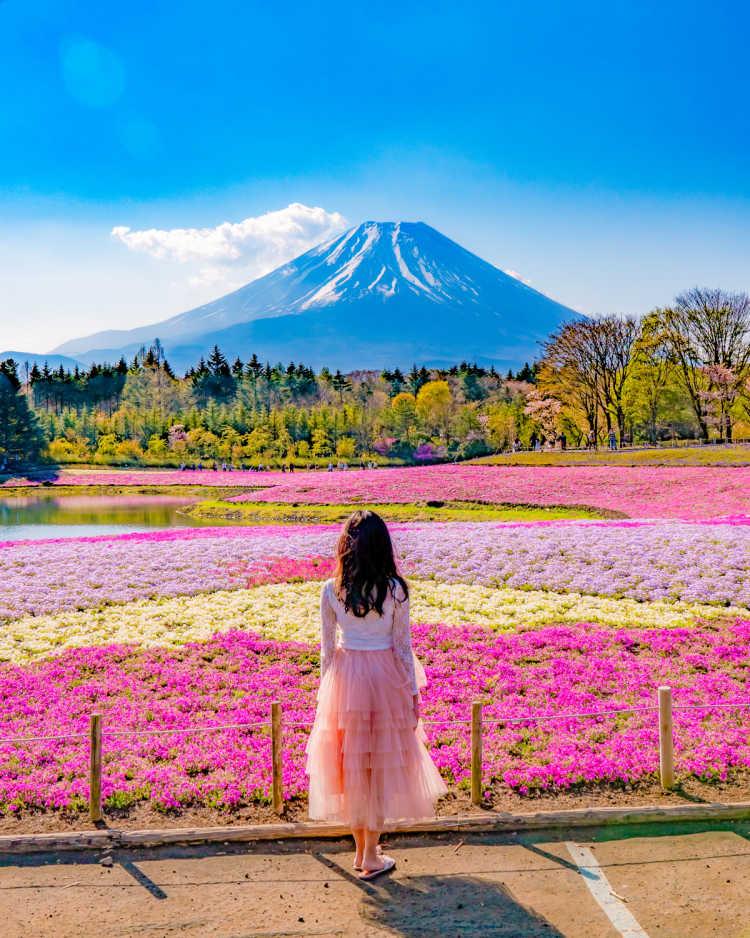 80万株もの芝桜が咲き誇る富士山絶景スポット | 富士芝桜まつりの口コミ