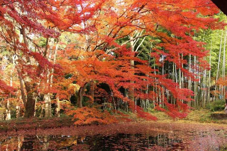 The Vivid Autumn Leaves Of Solemn Chuson-ji Temple | Review of Chuson-ji Temple