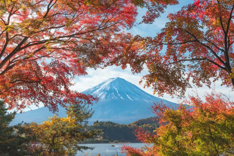 日本と象徴富士山と紅葉 | 河口湖の口コミ