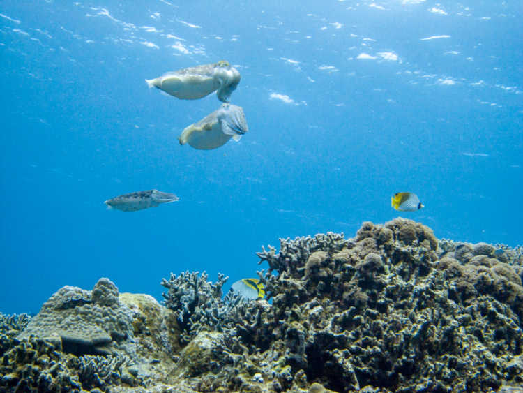 This Is The Sea Of Okinawa!  The Paradise Of Tropical Fish In Very Clear Water | Review of Kerama Islands